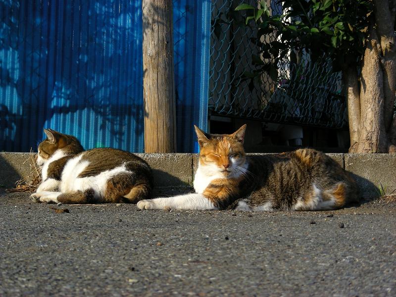 駐車場で寝てる猫たち2