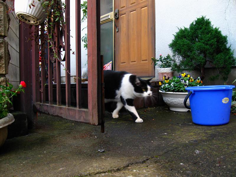 門柱の黒白猫2