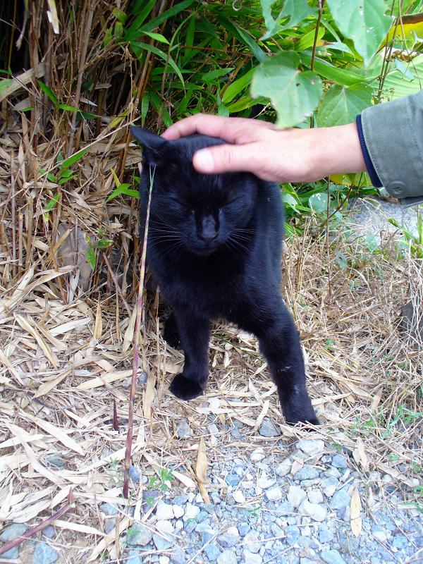 撫でられた黒猫2