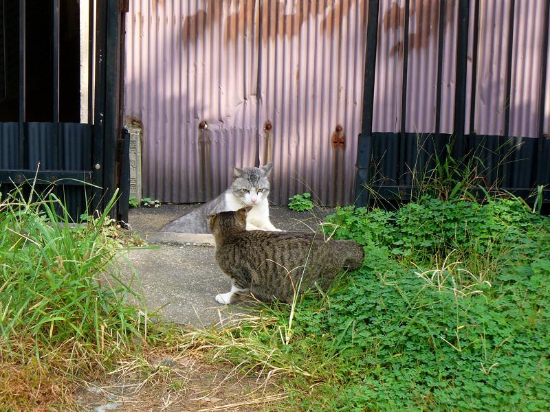 出会ってしまう猫たち2