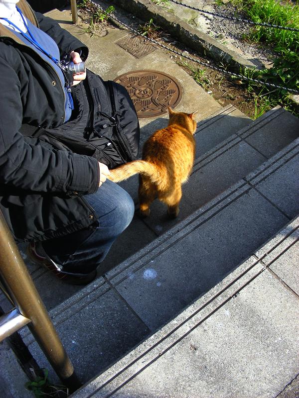 階段に出てきた茶トラ猫3