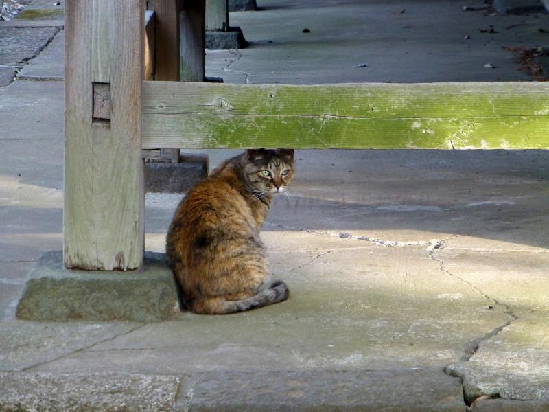 振り返るサビ柄の猫1