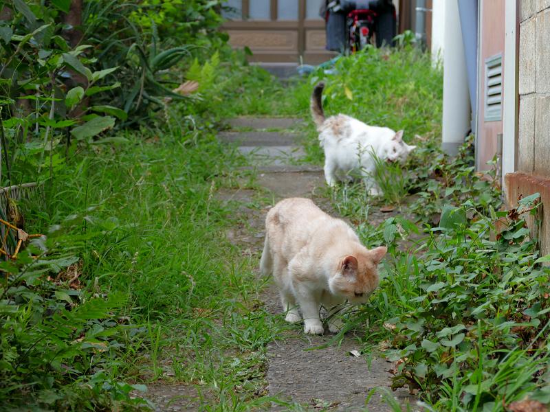 草を食ってる猫たち1