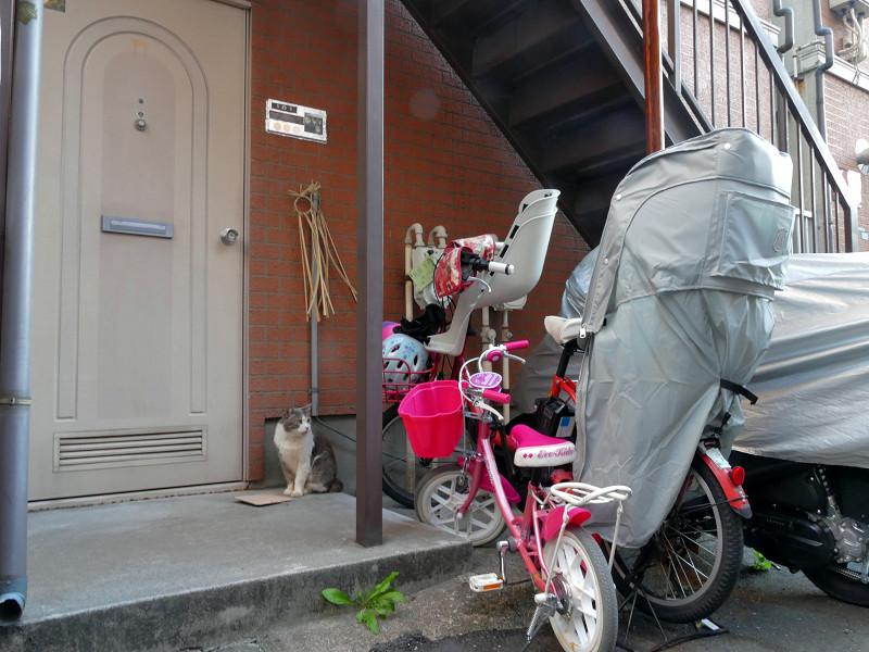 ドア前のグレー白猫1