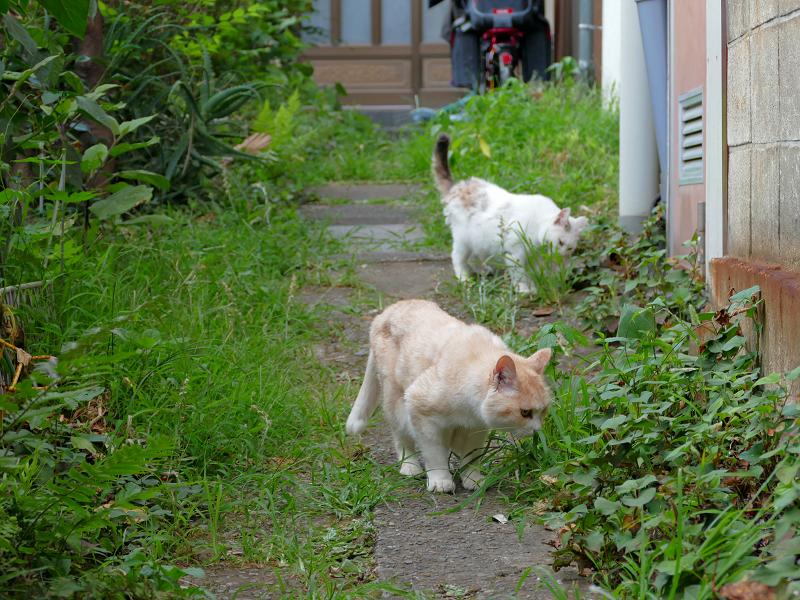 草を食ってる猫たち2