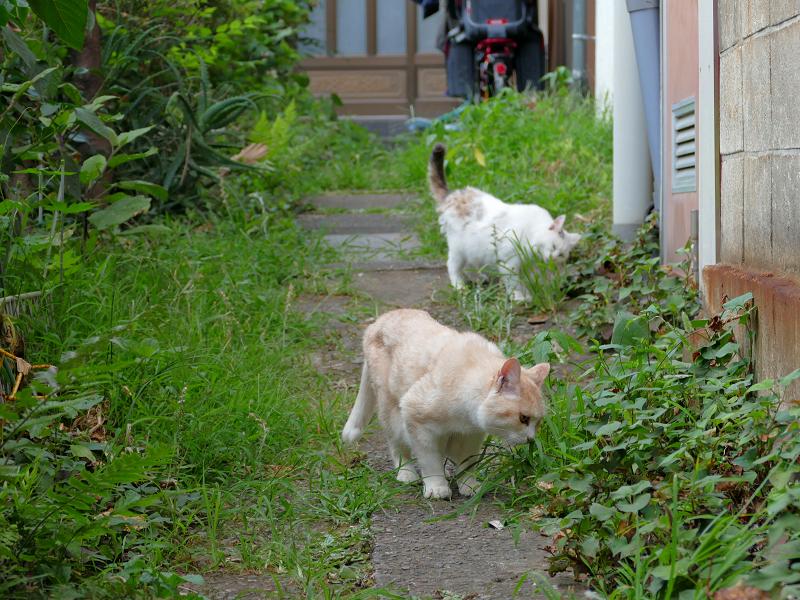 草を食ってる猫たち3