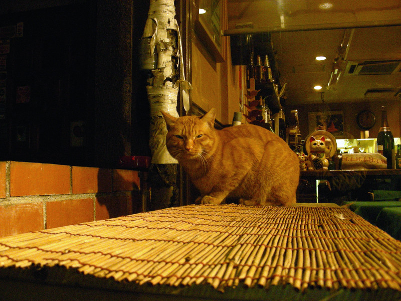 飲み屋の茶トラ猫1