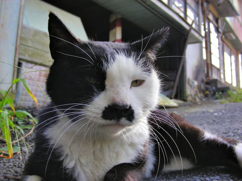 再会した黒白猫1