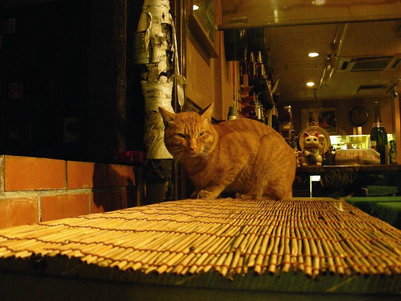 飲み屋の茶トラ猫2