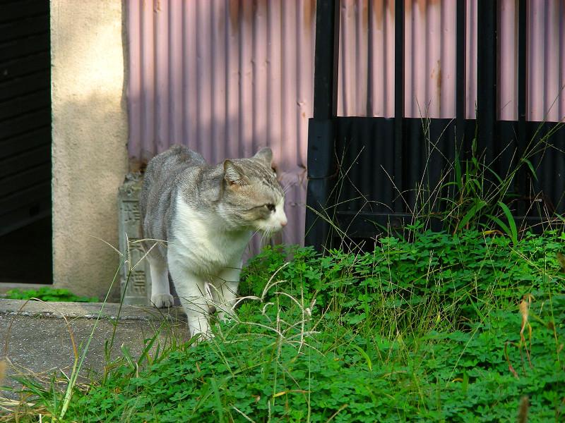 睨み合った猫2