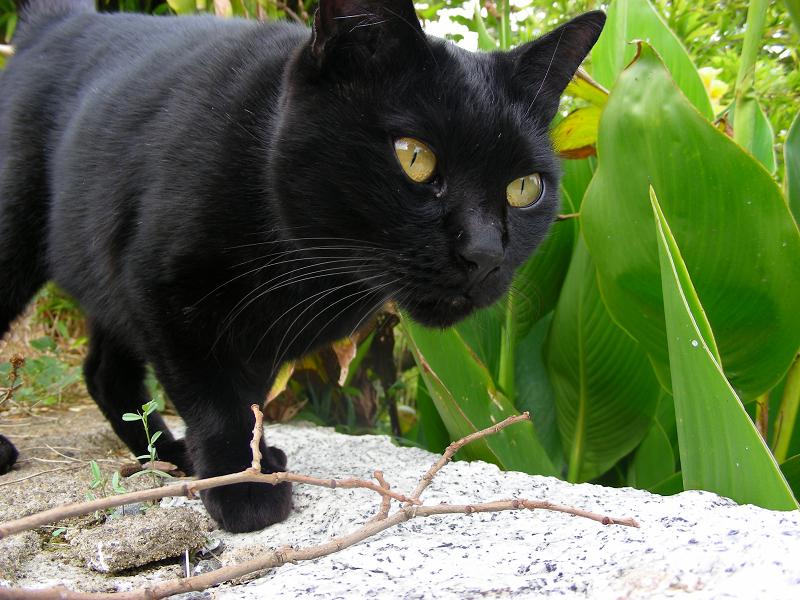 笹薮の黒猫2
