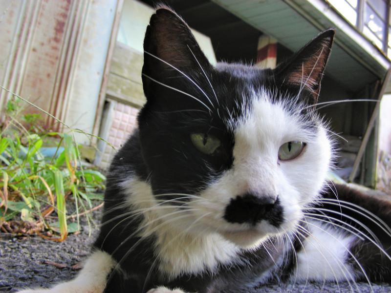再会した黒白猫3