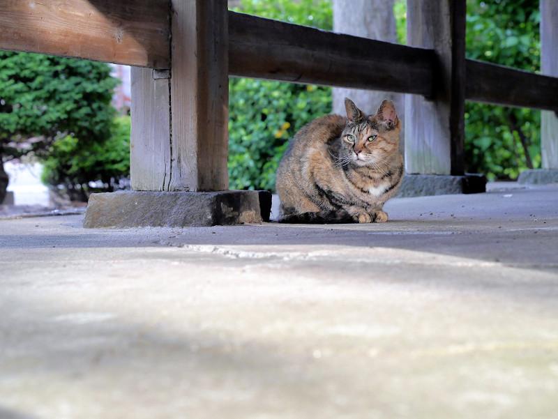 縁の下のサビ柄猫1
