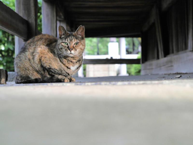 縁の下のサビ柄猫3