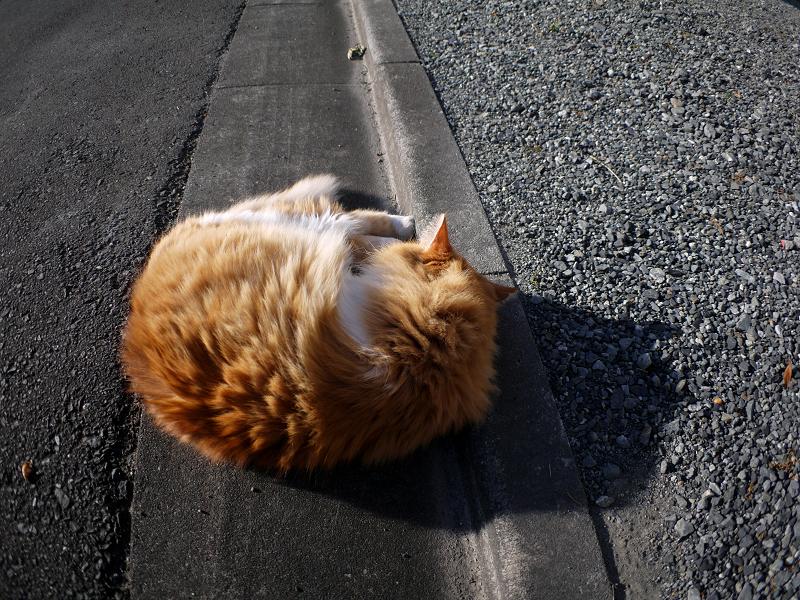 L字型側溝と毛長の茶白猫1