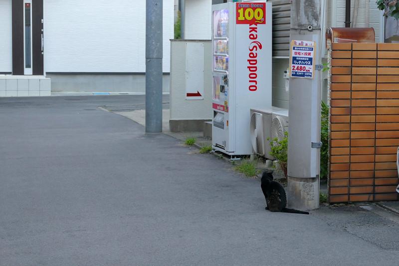 路地の黒猫1