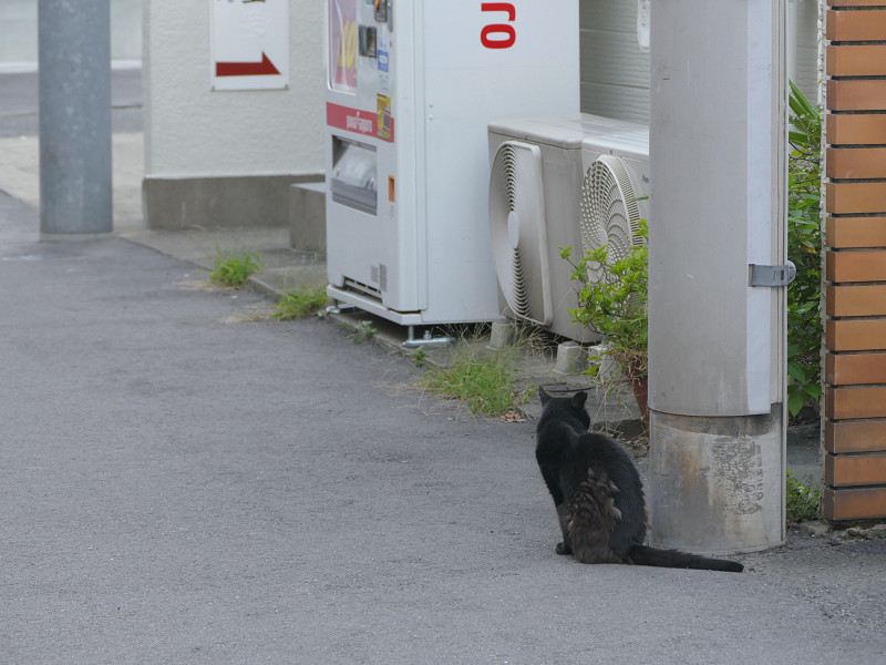 路地の黒猫2