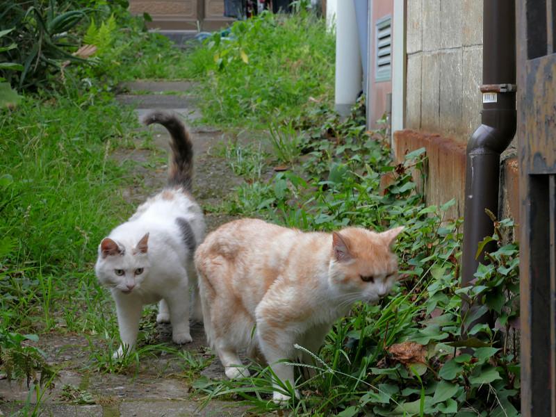 草を食う猫と尻尾が立ってる猫3