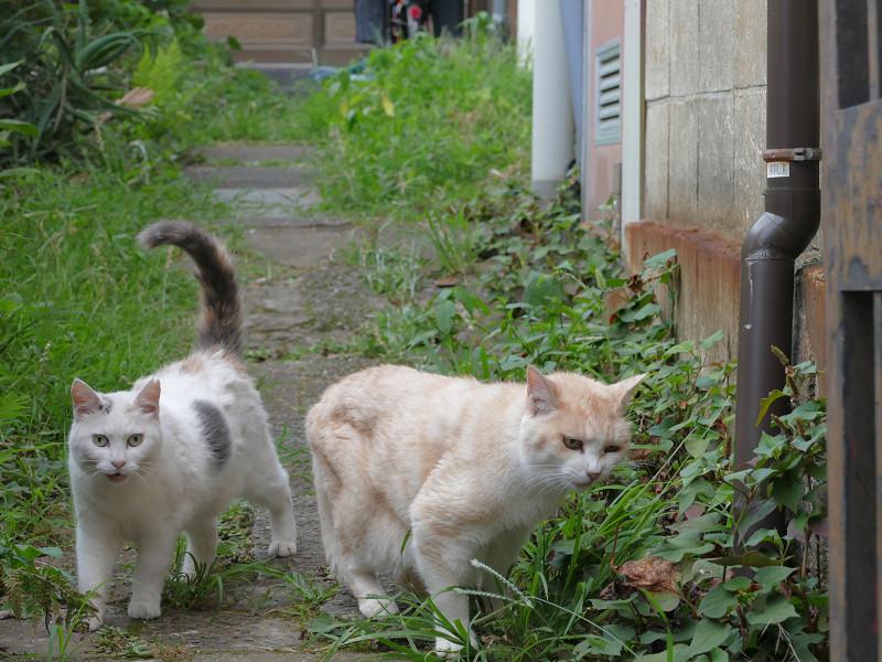 草を食う猫と尻尾が立ってる猫4