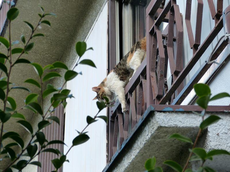 窓から出て来た猫1