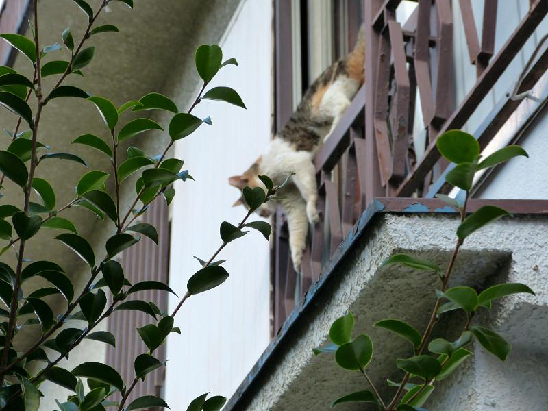窓から出て来た猫2