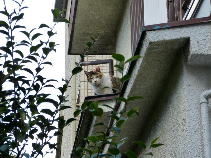 窓から出て来た猫3