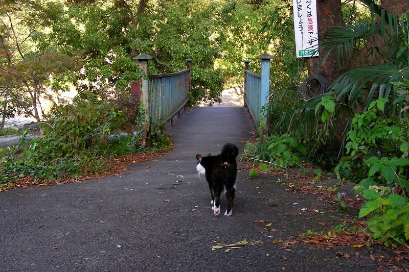 鉄橋に向かってる黒白猫1
