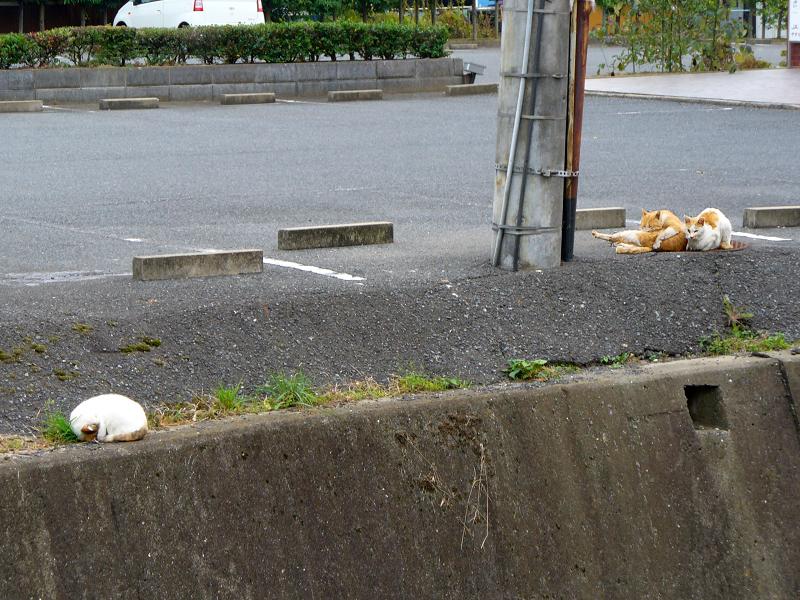 駐車場の端の猫1