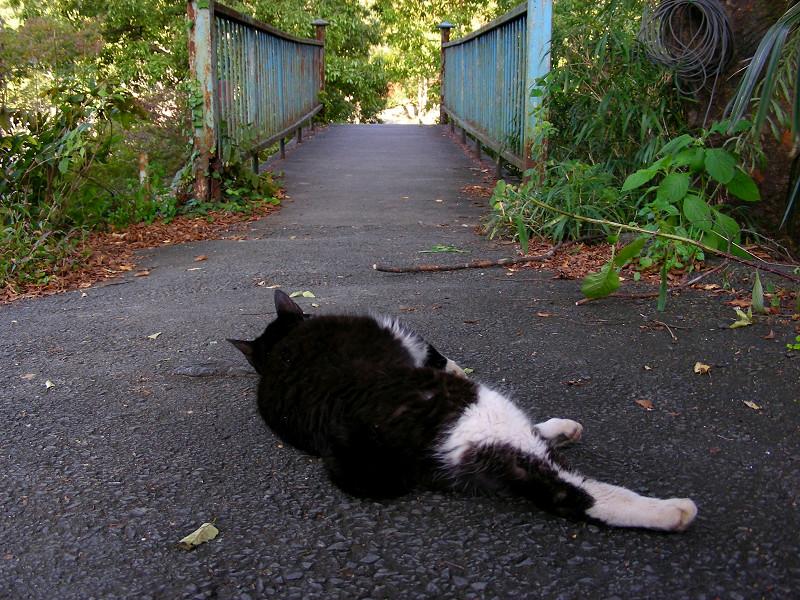 鉄橋に向かってる黒白猫2