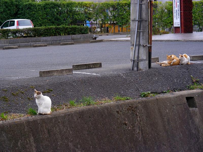駐車場の端の猫2