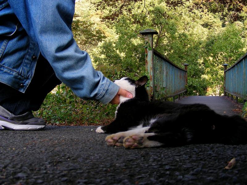鉄橋に向かってる黒白猫3