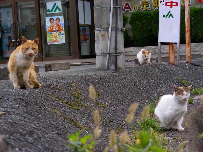 駐車場の端の猫3