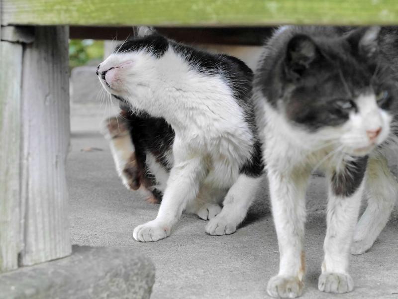 縁の下に出て来た猫2匹1