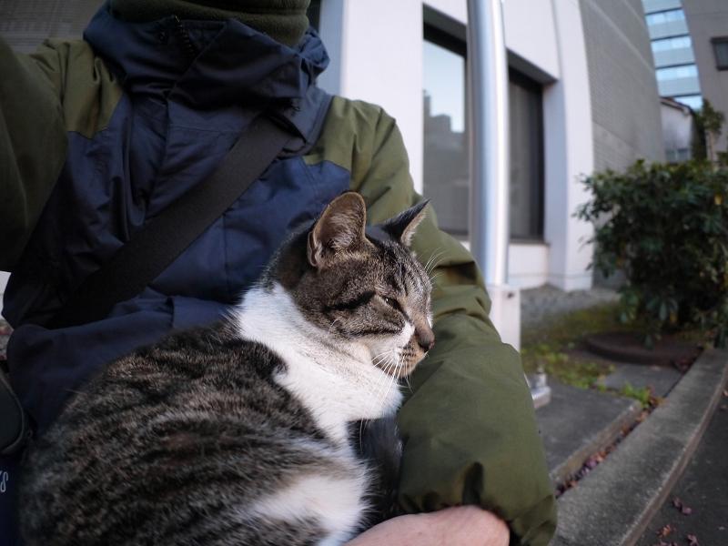 膝で抱かれてるキジ白猫1