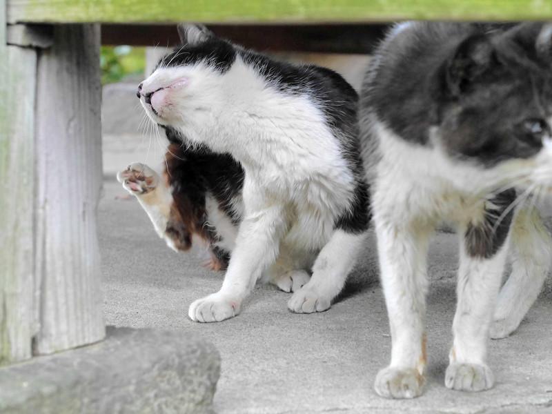 縁の下に出て来た猫2匹2