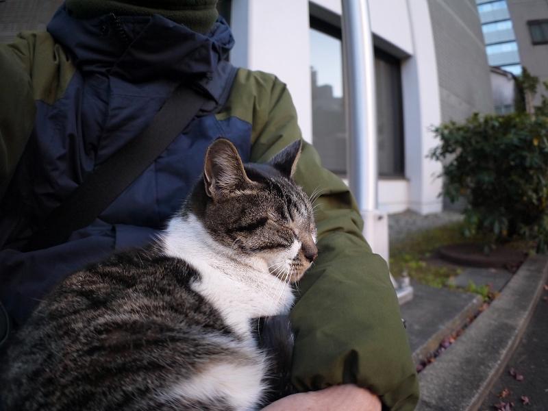 膝で抱かれてるキジ白猫2