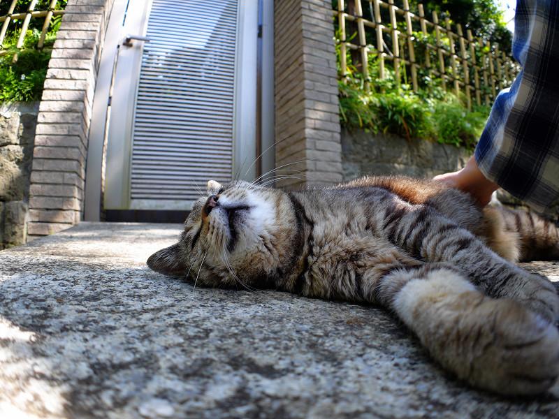石橋で横になってるキジトラ猫2