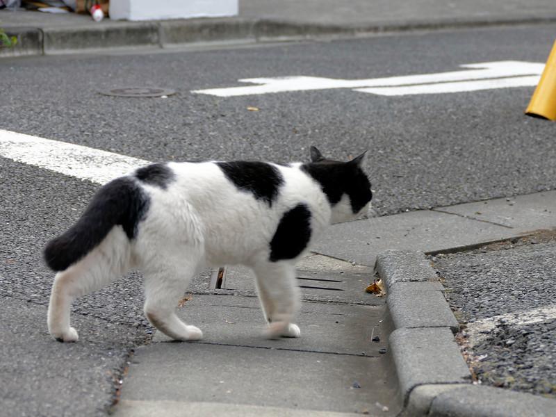 目の前を歩いてる白黒猫3