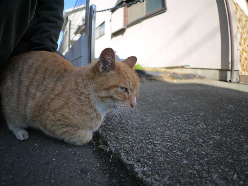 足元に座って腰を触られてる茶白猫1