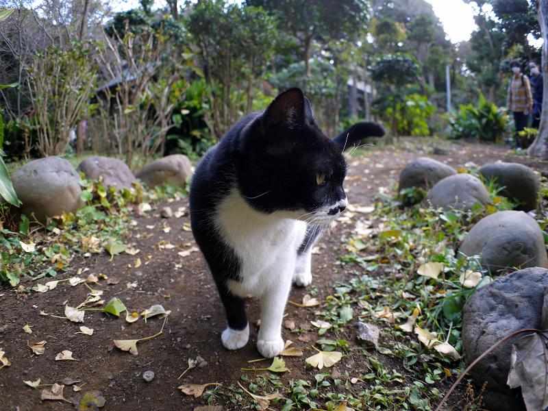 横を向いてる黒白猫