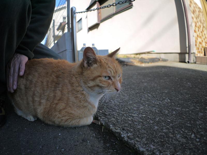 足元に座って腰を触られてる茶白猫2