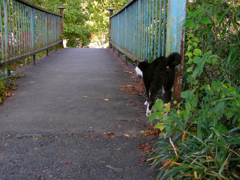 鉄橋を渡る黒白猫1