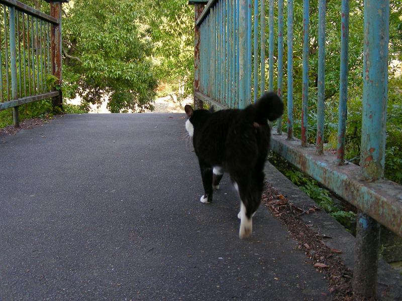 鉄橋を渡る黒白猫2