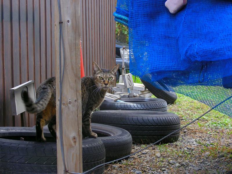 物体の上のキジトラ猫2