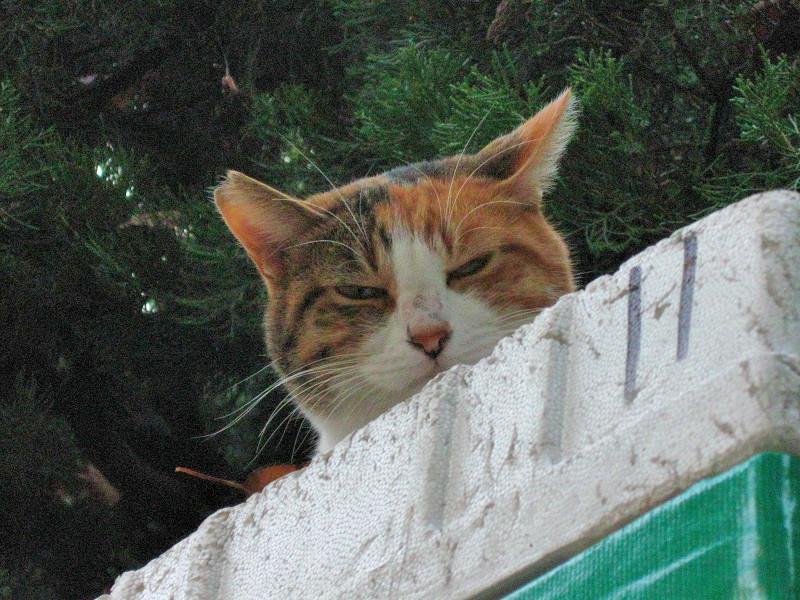 物置の上から見ている三毛猫2