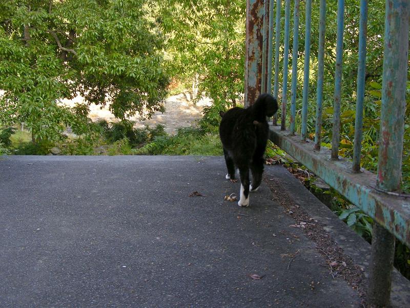 鉄橋を渡る黒白猫3