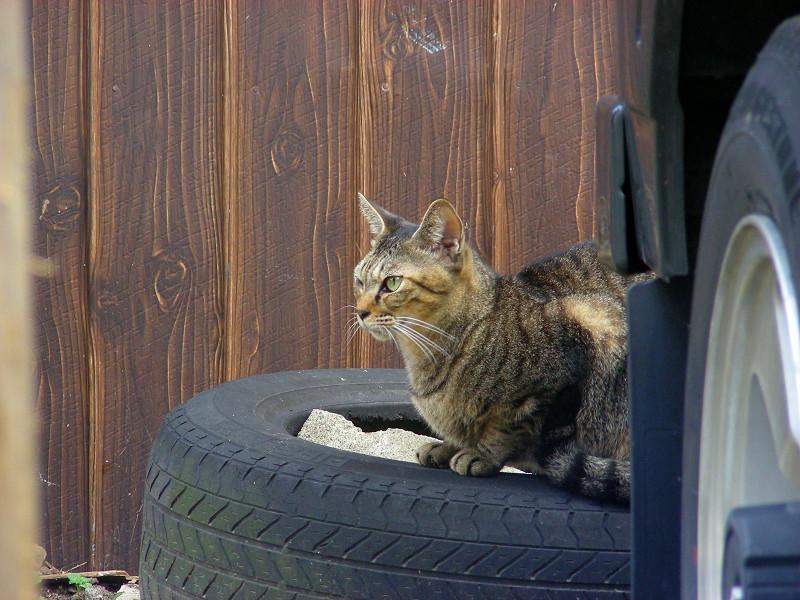 物体の上のキジトラ猫3