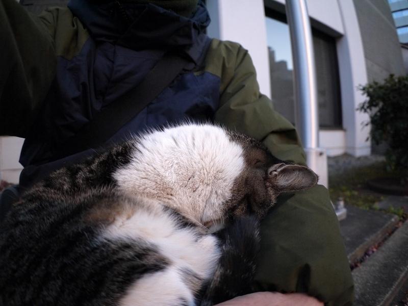 抱かれて寝ているキジ白猫1
