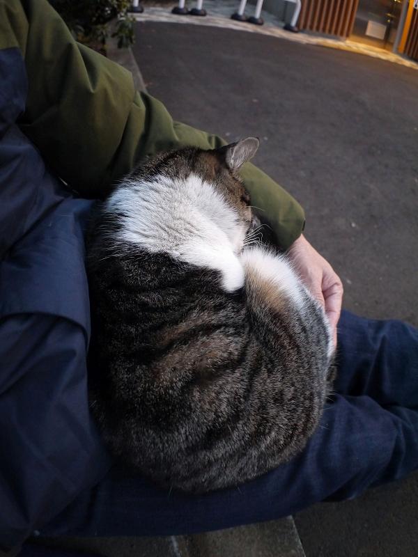 抱かれて寝ているキジ白猫2