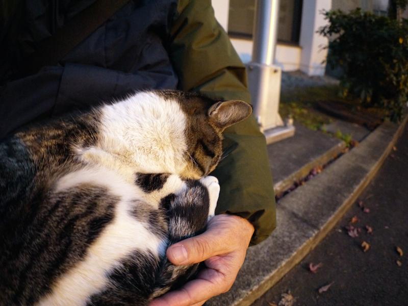 抱かれて寝ているキジ白猫3
